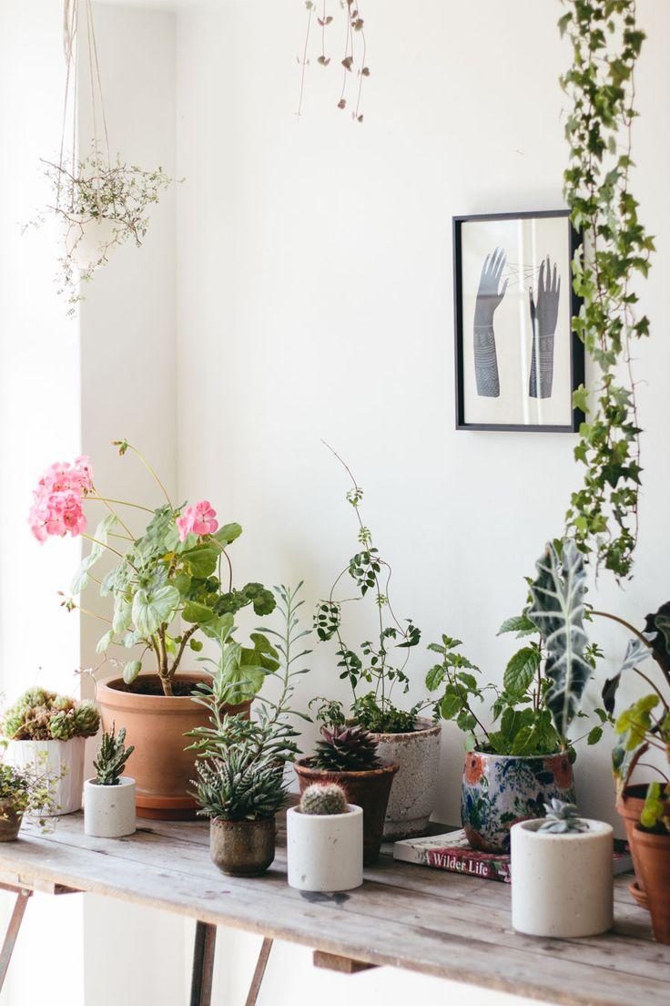 1000 ideas about desk plant on pinterest office plants cubicle wallpaper and desks - Indoor desk plants ...