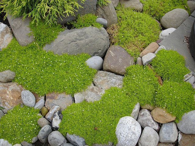 soft and stone: Design Gardens, Decor Gardens, Gardens Design Ideas, Modern Gardens Design, Irish Moss, Rocks Pathways, Gardens Rocks Ideas, Beautiful Gardens, Moss Gardens Design