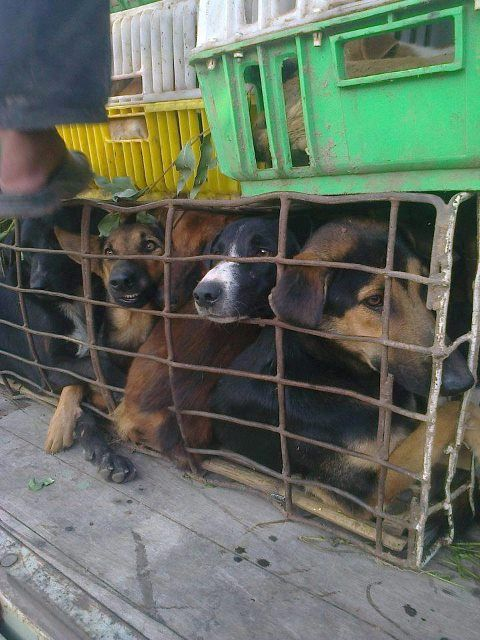 The dog meat trade must end! Take action now go to https://www.facebook.com/#!/TradeofShame!