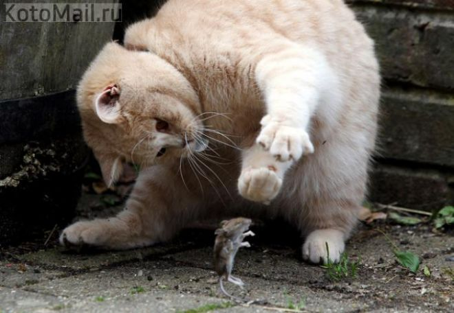 Мурлыки | Смешные фото кошек, Смешные животные, Кошки и котята