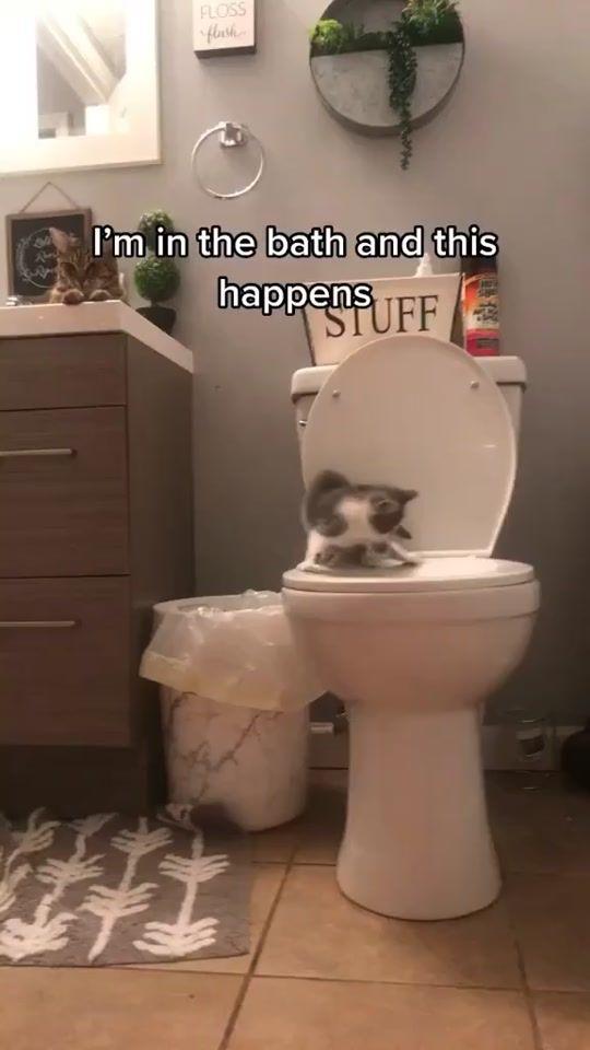Memezar Memezar Official Tiktok Watch Memezar S Newest Tiktok Videos Cute Funny Animals Funny Cute Cats Cat Memes