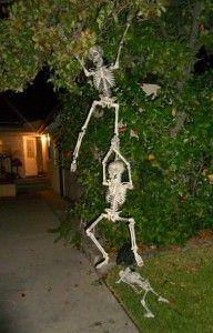halloween skeletons hanging from a tree - Halloween Skeletons