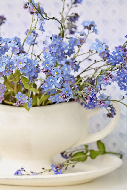 Forget-Me-Nots in a white ironstone teacup.
