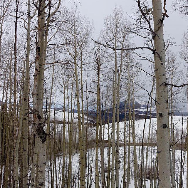 Morning hike. #Telluride #tgsw16