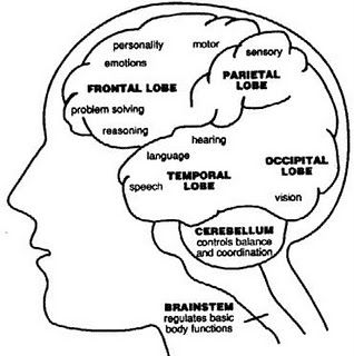 Brain function areas within lobes...great simple refresher!