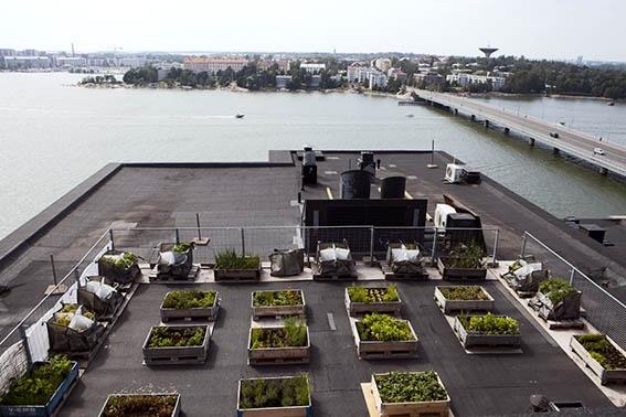 Roof top garden in Helsinki #rooftopgardening