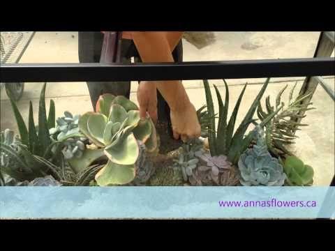 DIY Succulent Aquarium - YouTube