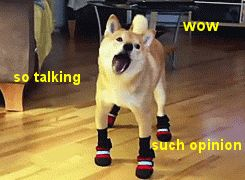 "Understand the ""Doge"" Meme In 7 Short Steps | The Barkpost"