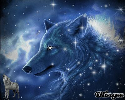 Cool Moving Wolf | Cool Wolf | Interesting Items ...