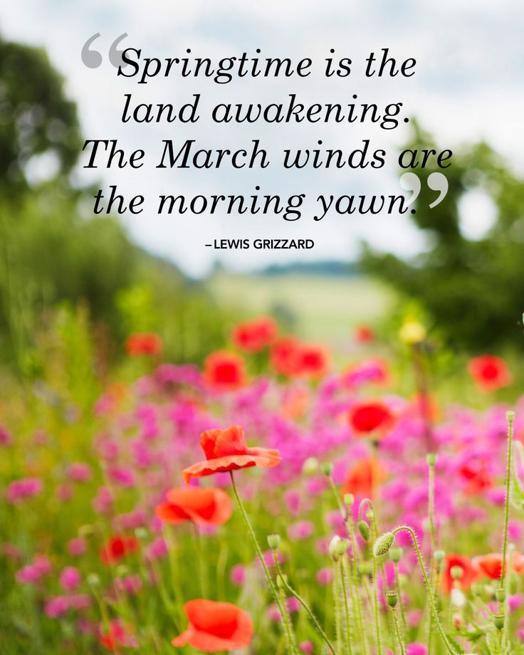 Pictures And Inspiration: 25 Spring Quotes To Welcome The Season Of Renewal