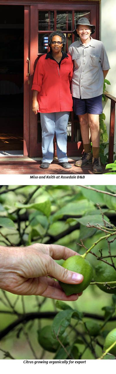 Rosedale-Organic-Citrus-Farm-and-B