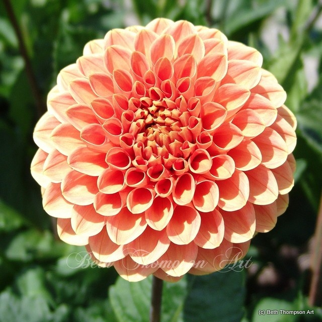 Dahlias - love them!  We have yellow ones.