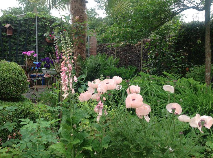 Mijn tuin  Roze papaver en vingerhoedskruid