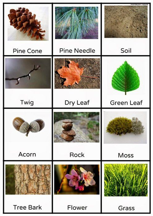 Free Outdoor Scavenger Hunt Printable by Anastasia from Montessori Nature at Childhood 101