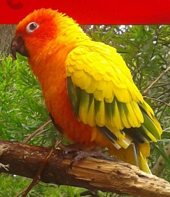 dinosaur walk bird park in Walpole WA