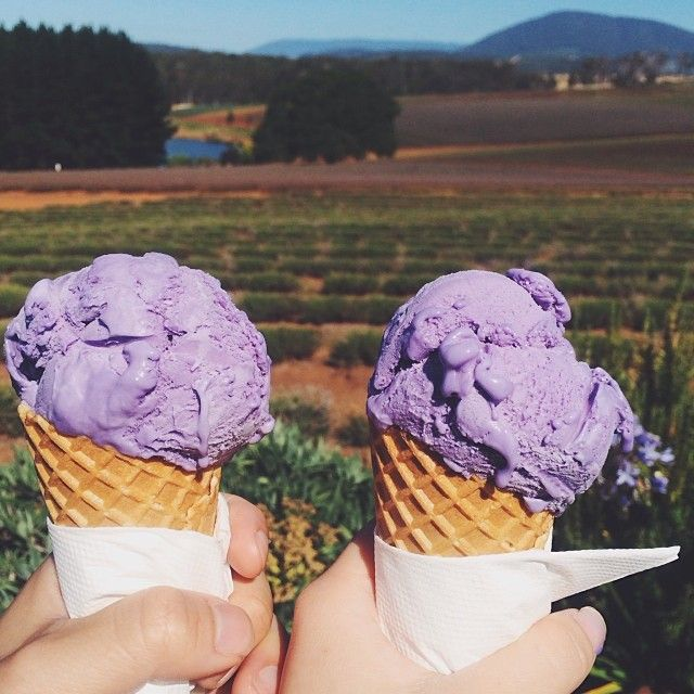 How good does this look? Lavender ice cream from a Tasmanian lavender farm.  Image Credit: Hannah Doh