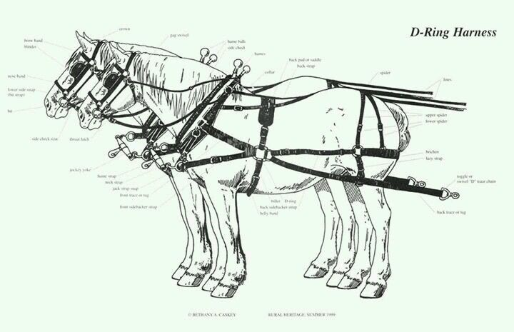 D Ring Harness Horses Donkeys And Mules Pinterest