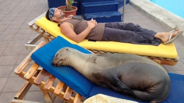 Sea lion loves his chaise lounge