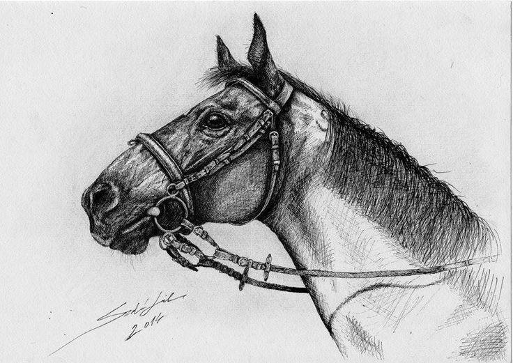 Ballpoint pen horse portrait