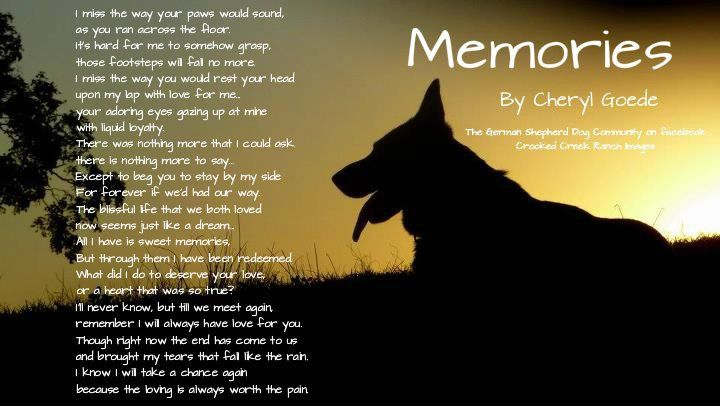 17 Best images about Dogs in heaven on Pinterest | Miss ...