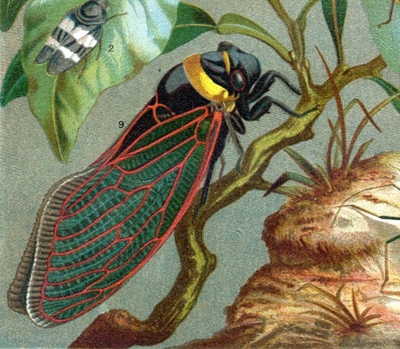 Image result for cicada art