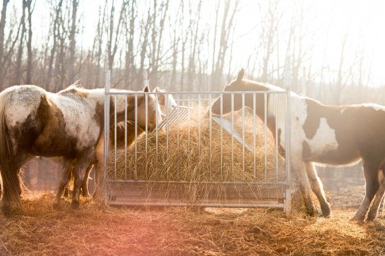 Five Little Known Facts About Horse Hay Horses Horse Hay Horse Farms