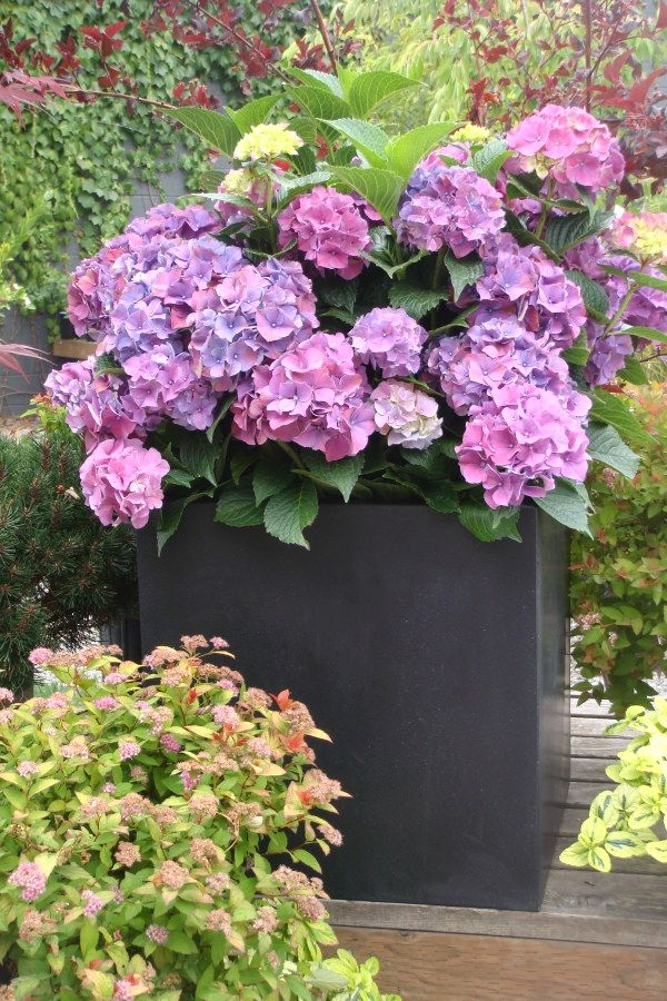 10 Beautiful DIY Container Garden Designs you might consider for
