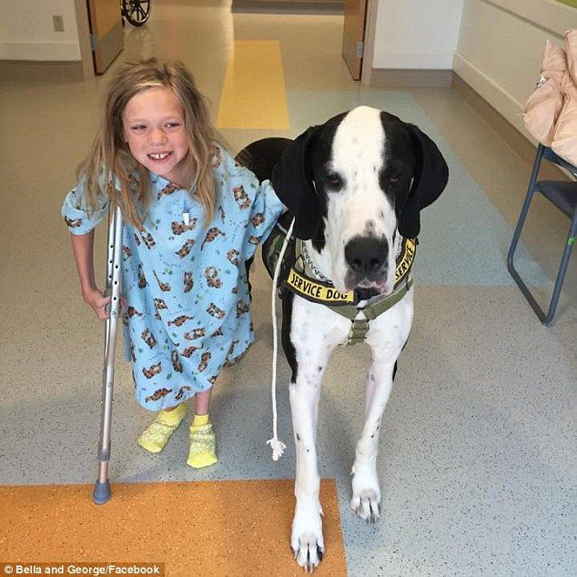 Best Foot Forward Until She Met George Her Service Dog Was Forced