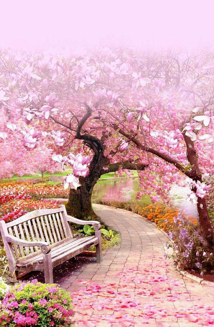 pink art beautiful the art of chris cocozza magnolia drive by rochelle alers - Japanese Garden Cherry Blossom Bridge