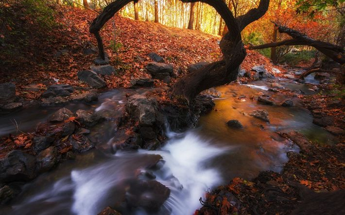 Download wallpapers forest, river, autumn landscape, yellow leaves