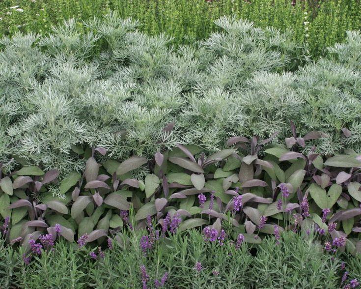 Krauter Salbei Lavendel Ysop Und Beifuss Beifuss Krauter Lavendel Salbei Und Ysop Bee Garden Perennial Plants Plants