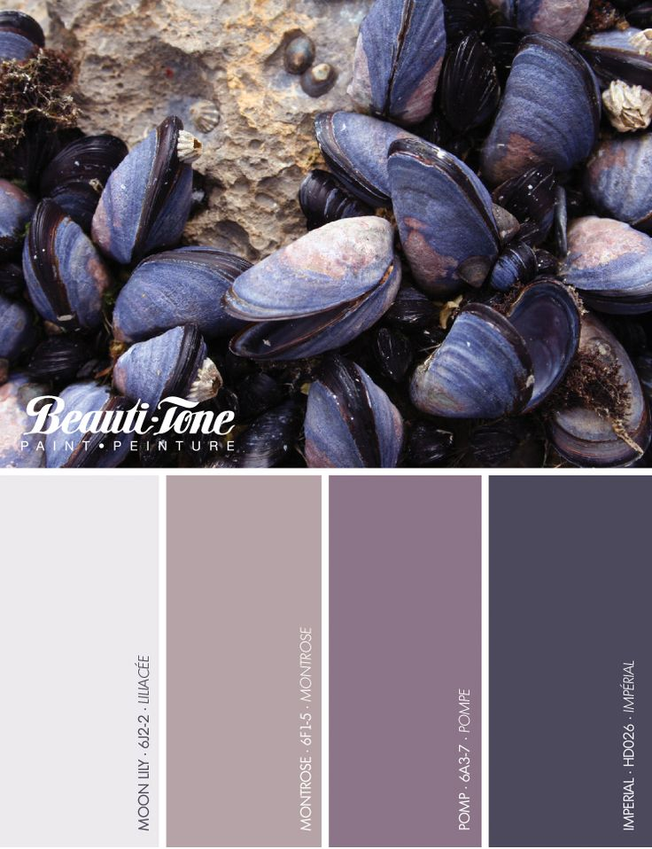 Inspiration can come from anywhere - like the blue mussels of Prince Edward Island.  Get inspired with the latest #colours from #BeautiTone.