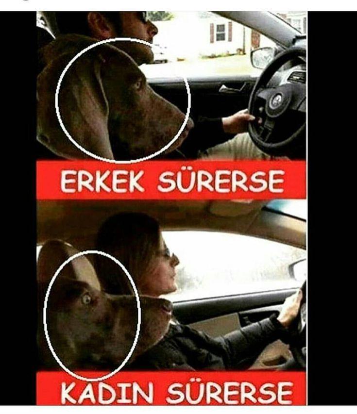 Kadınlarda arabayı gayet iyi kullanabiliyor....