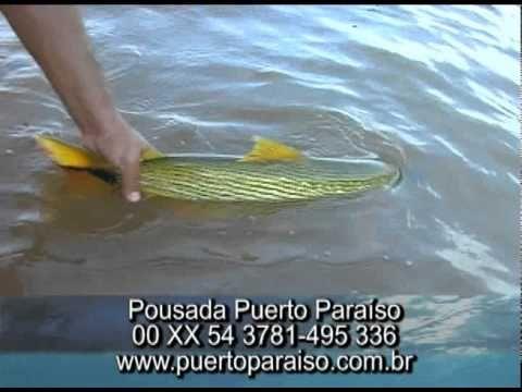 Programa Planeta Turismo Pescaria de Dourado na Argentina.wmv