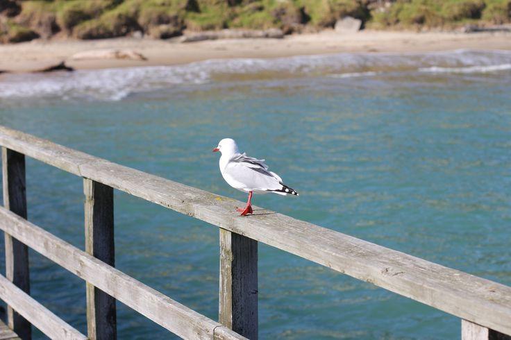 Seagull on wharf