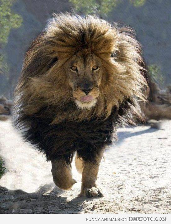 Fabulous lion