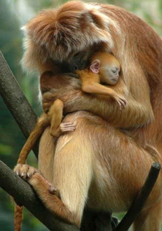 78+ Heart-touching Photos of Mothers and Their Babies