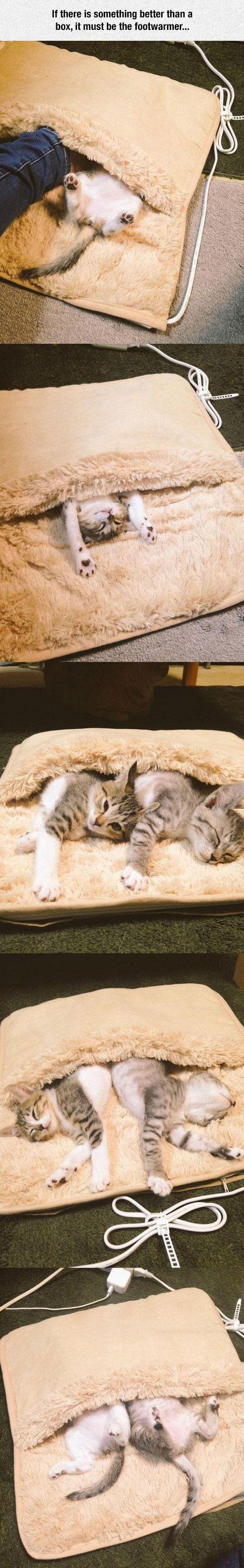 Kittens discover footwarmer cats funny pictures