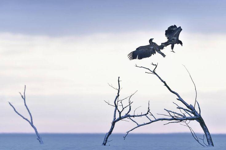 """II wyróżnienie """"Taniec"""" -  Paweł Chara - To najlepsze zdjęcia ubiegłego roku! Wygrały nasz Wielki Konkurs Fotograficzny"""