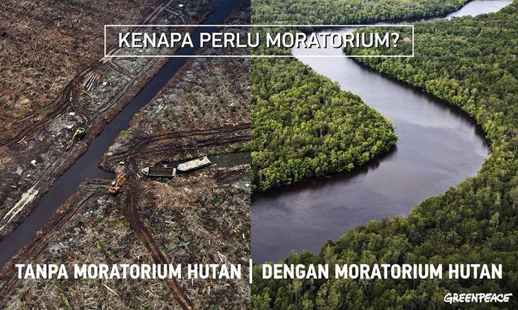 Kenapa perlu moratorium (jeda tebang) hutan? Karena masa depan hutan seluas 42,8 juta hektar atau setara dengan luas tiga kali Pulau Jawa bergantung dari kebijakan pemerintah.