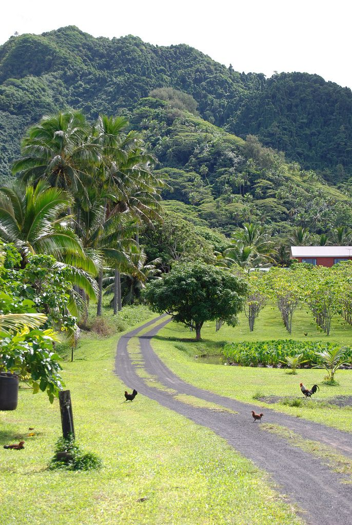 ISLAS COOK - Rarotonga, Titikaveka | A side road on the south side of Rarotonga, leading through taro fields and fruit orchards.