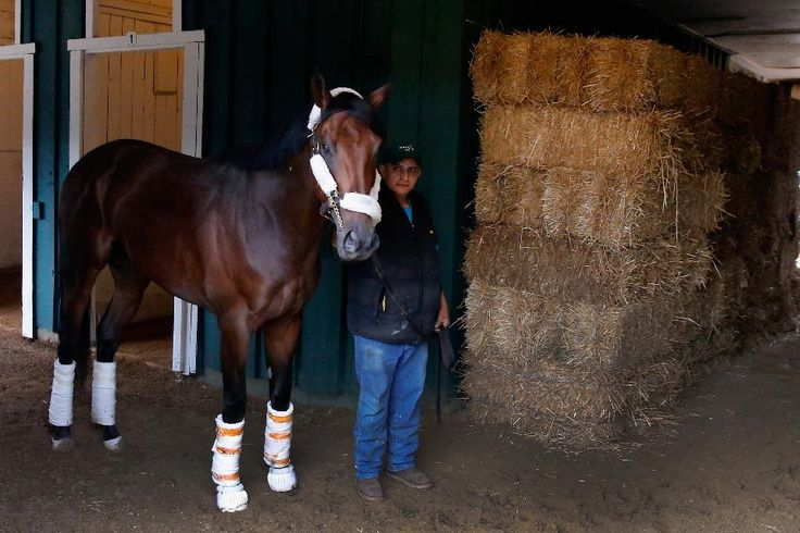 How To Bet The 2016 Preakness Stakes: Expert Betting Strategy ...