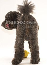 #dog http://www.francescovieri.com/pet-a-portrait.html