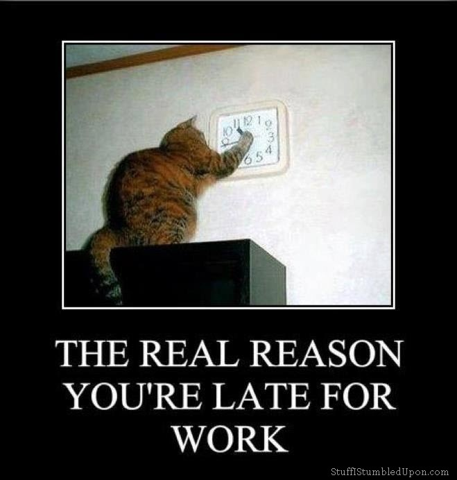 Funny Cat Meme About Work : Cat memes clock watcher meme the real reason youre