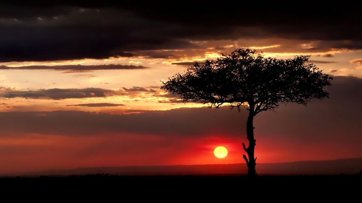 sunset sky clouds tree hd wallpaper download high variety