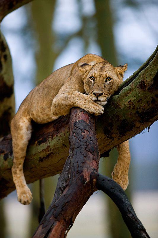 ~~Kenya by *serhatdemiroglu~~