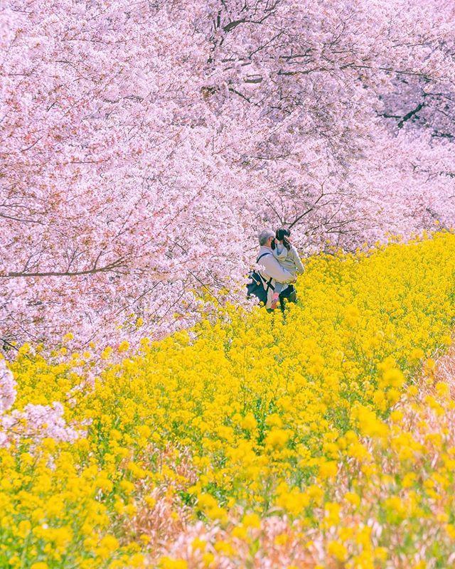 ZEKKEI JapanさんはInstagramを利用しています:「#熊谷桜堤#埼玉県 ...