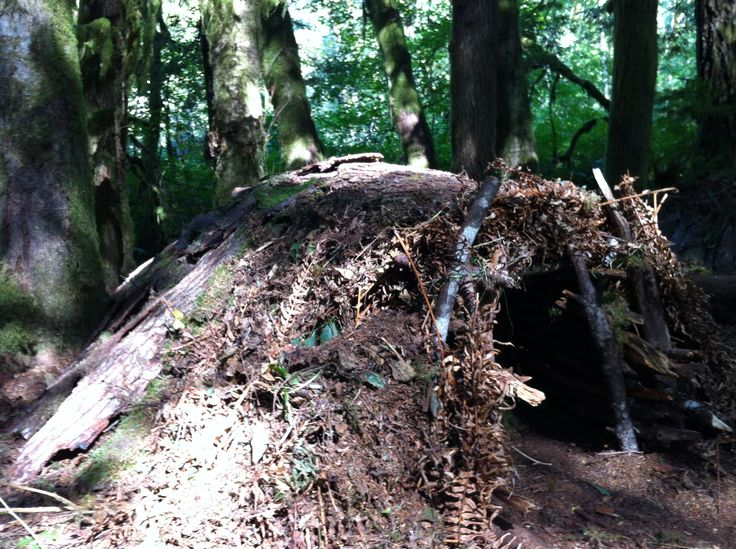 Survival Shelters: Top best 15 shelters to survive in the wild