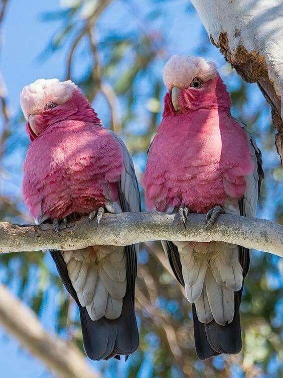 Afbeeldingsresultaat voor the most beautiful birds in the world
