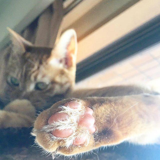 * * #goodmorning * #29祭り #29祭 * ぷっくりピンクの肉球だよ🐾 今月もあと少し もう直ぐ師走💨 * #igersjp#lifestyle#slowlife#simple#simplelife#lifeisbeautiful#cat#cats#olympus#morning#instgood#茶トラ#愛猫#暮らし#丁寧な暮らし#スローライフ#シンプルな暮らし#猫#暮らしを楽しむ#持たない暮らし#日々の暮らしを楽しむ#シンプルライフ#猫との暮らし#猫のいる暮らし#にゃんすたぐらむ#肉球